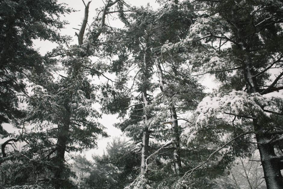 snow day_006